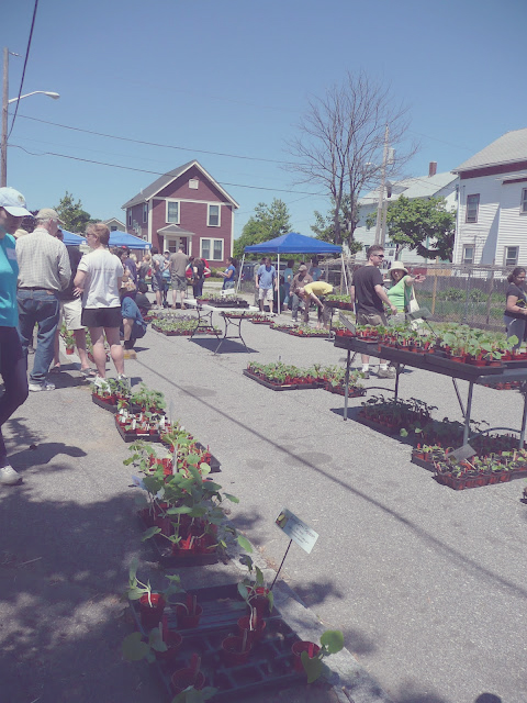 Southside Community Land Trust Rare and Unusual Plant Sale