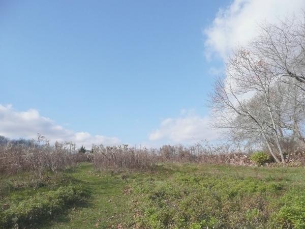 Slocum's River Reserve Dartmouth MA