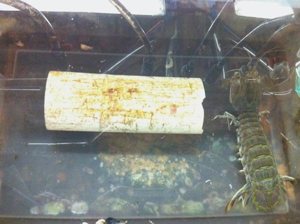 A visit to the shellfish aquaculture laboratory at Roger Williams University