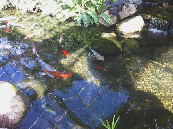 Roger Williams Botanical Center