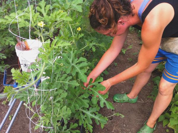 Roots Organic Farm