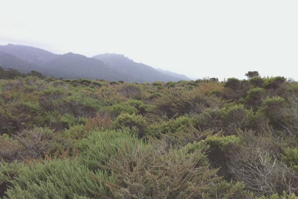 Point Lobos State Reserve Carmel, CA