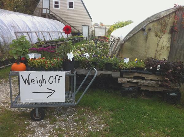 Frerich's Farm Giant Pumpkin Weigh-off