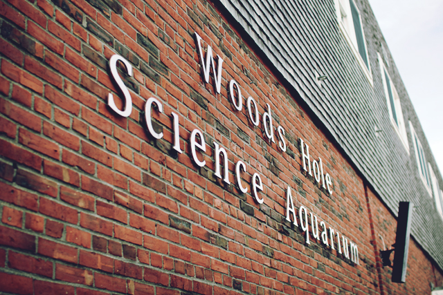 A visit to woods hole science aquarium Woods Hole Massachusetts
