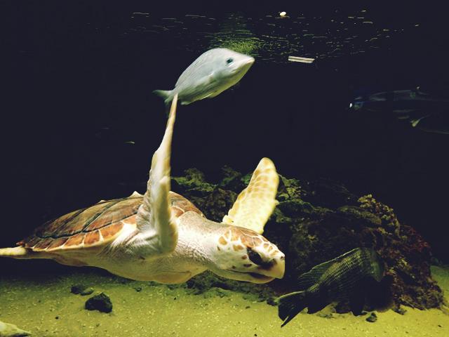 Savannah Marine Education Center and Aquarium