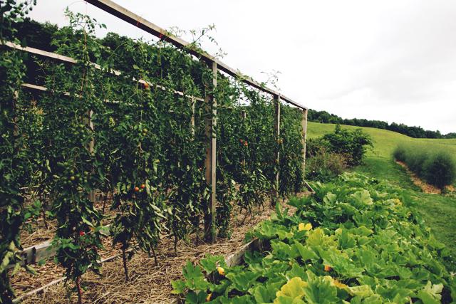 Exploring the Children's Farmyard at Shelburne Farms