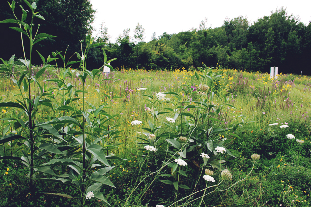 A visit to the Vermont Wildflower Farm