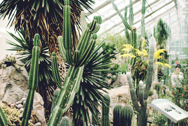 IMG_4985-US Botanic Gardens DC