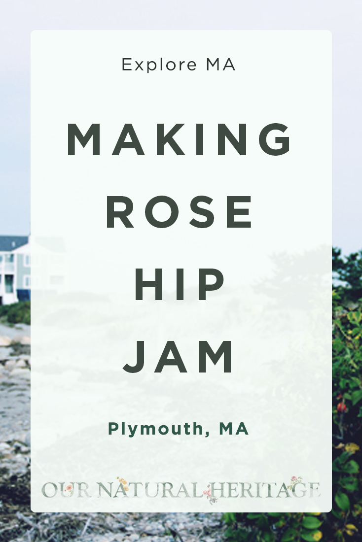 Making Rose Hip Jam Plymouth MA