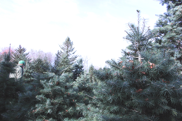 Searching for a Christmas Tree at Nagetuck Farm RI
