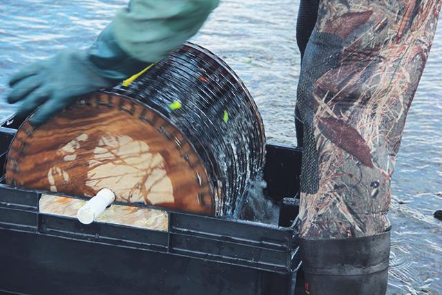 Oyster Aquaculture Tour RI
