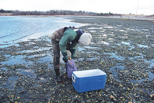Oyster Aquaculture Tour RI