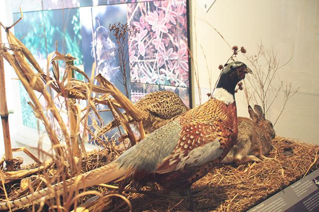 Audubon Center Bristol RI