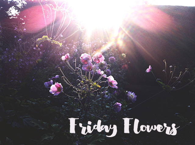 friday_flowers
