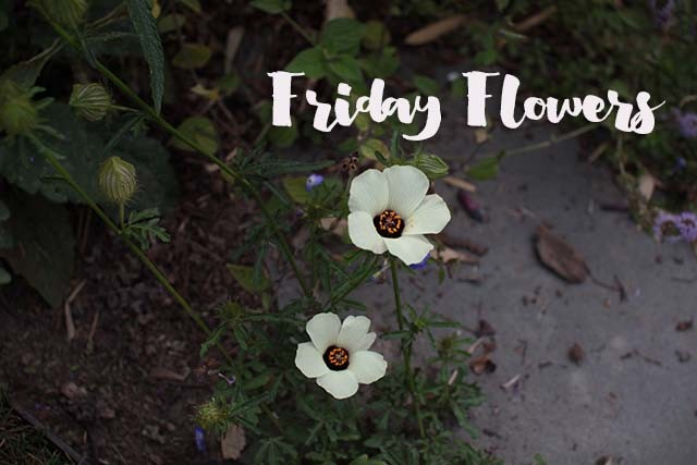 fridayflowers