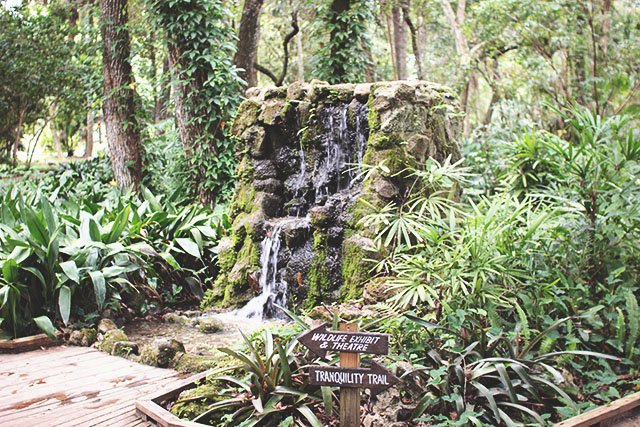 junglewaterfall
