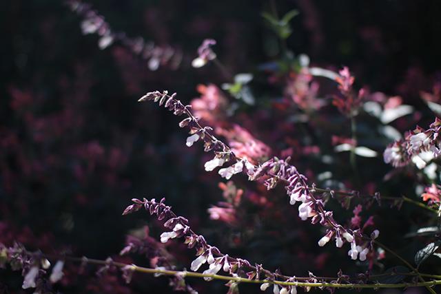Fall Fest at Tower Hill Botanic Garden