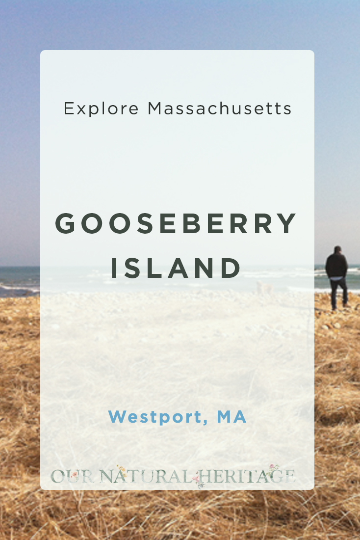 Gooseberry Island Westport Massachusetts