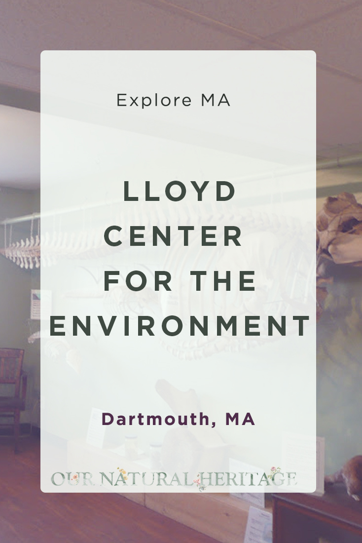 Exploring Nature at the Lloyd Center for the Environment in Dartmouth