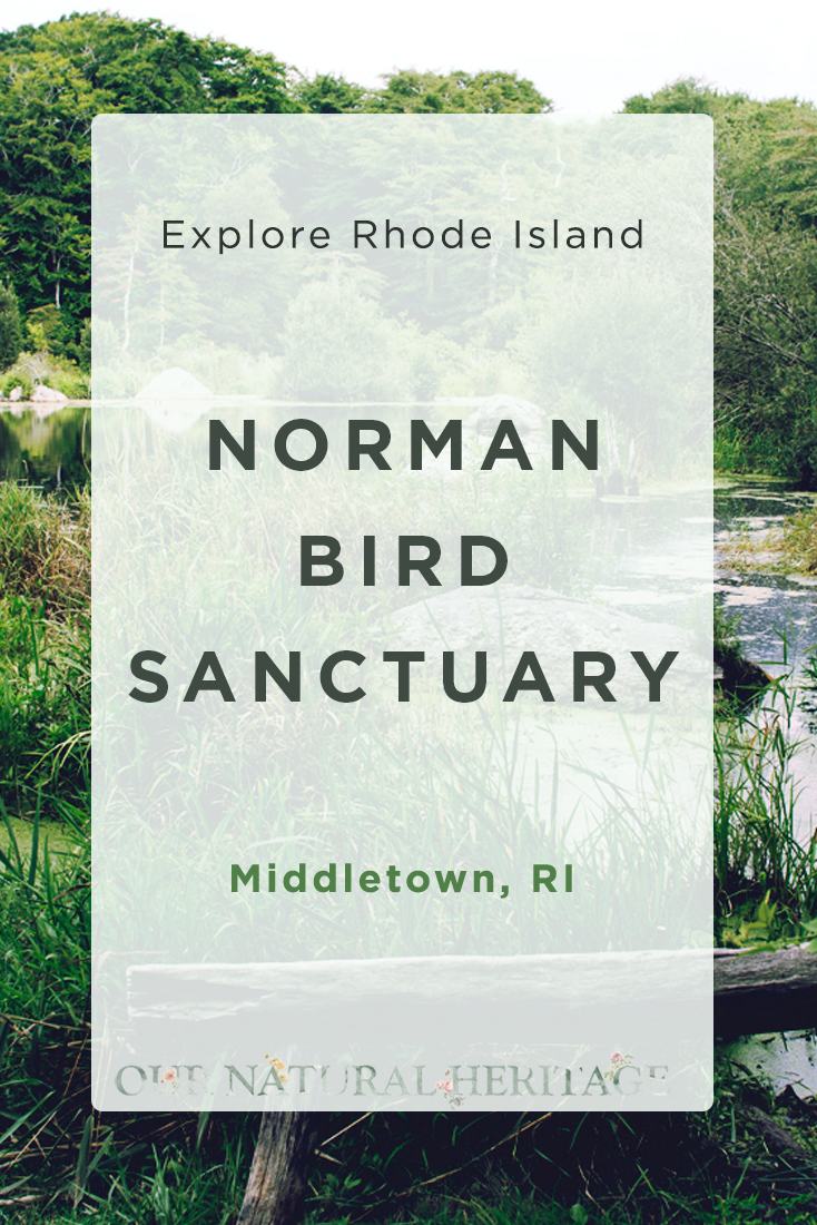 The Norman Bird Sanctuary Middletown RI