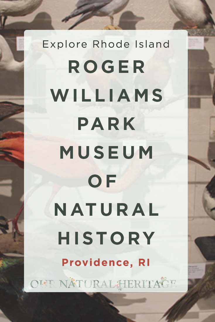 Rogers Williams Park Museum of Natural History