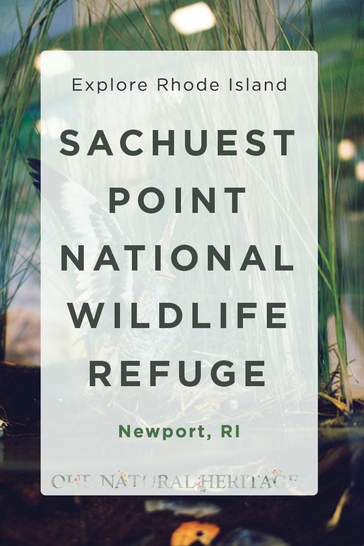 Sachuest Point National Wildlife Refuge Newport RI