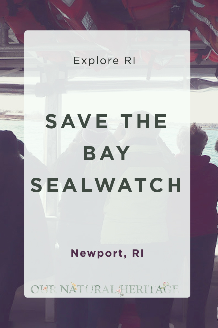 Seal Tour in Newport Harbor with Save The Bay