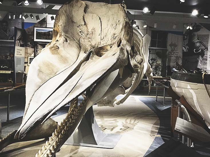Exploring the historic culture of the whaling industry at the New Bedford Whaling Museum
