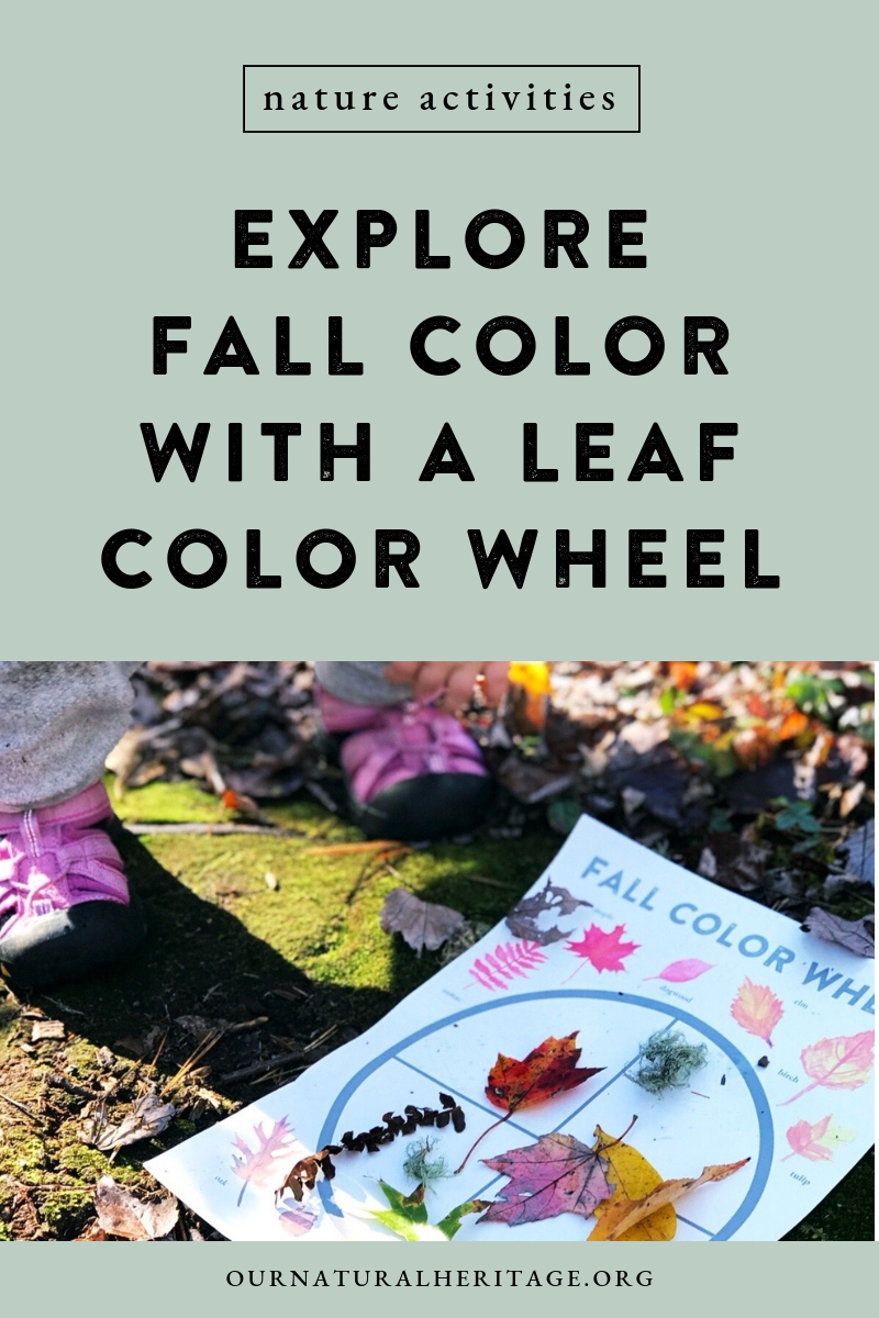 This fun FREE Fall kids activity helps toddlers learn to identify and sort colors. Includes instructions guide conversations about how and why leaves change color with older explorers.